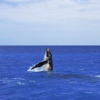 Alistate-Dr. Michael Poole`s Dolphin & Whale Watching Expedition